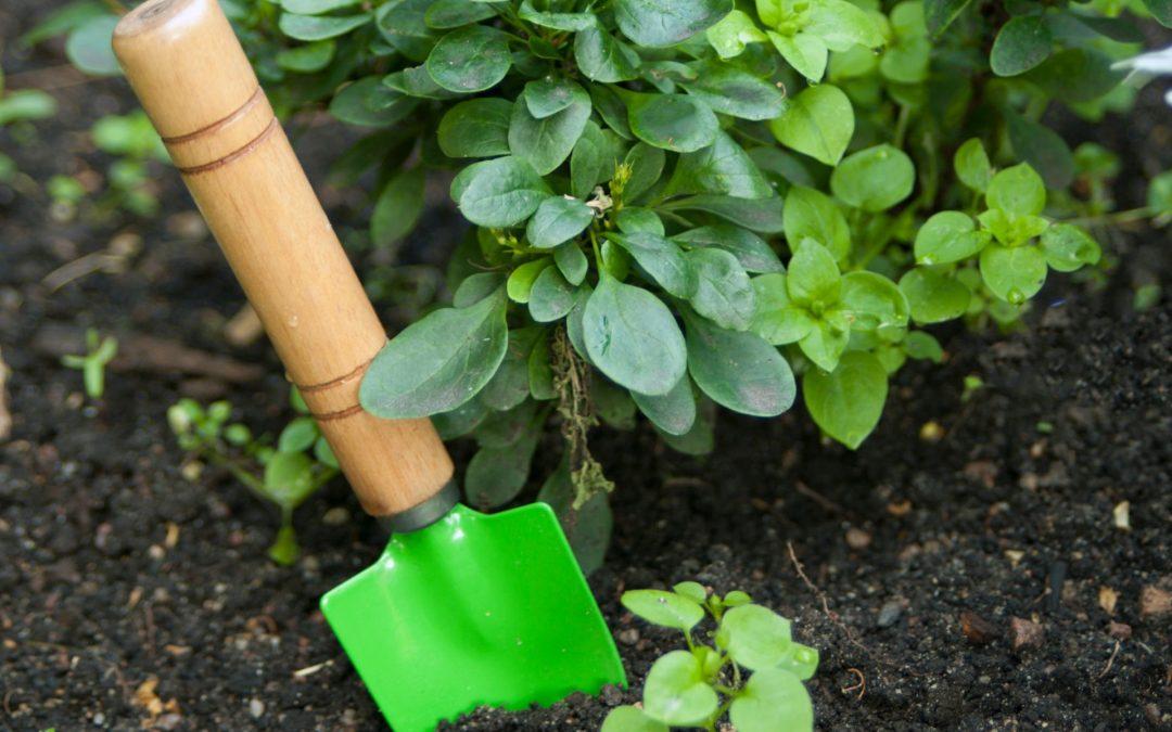 O ogród należy dbać